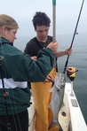 Bluefish on spinning gear